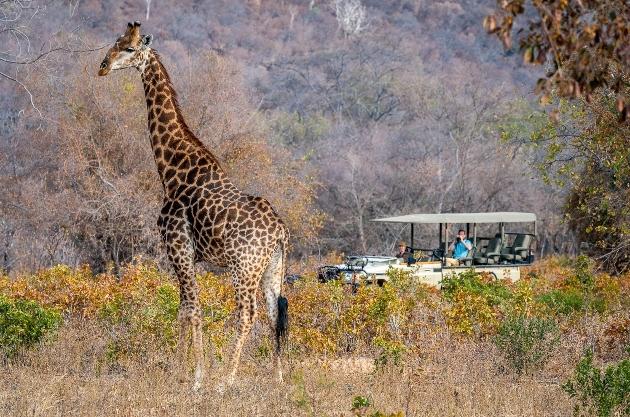 jeep tourists safari giraffe